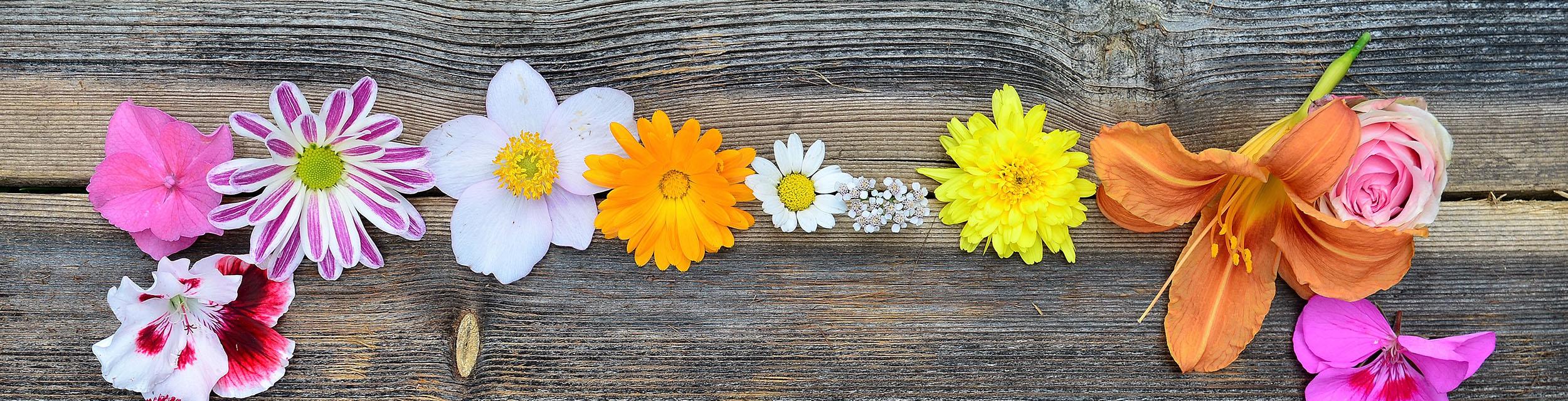Blüten auf Holz Hintergrund