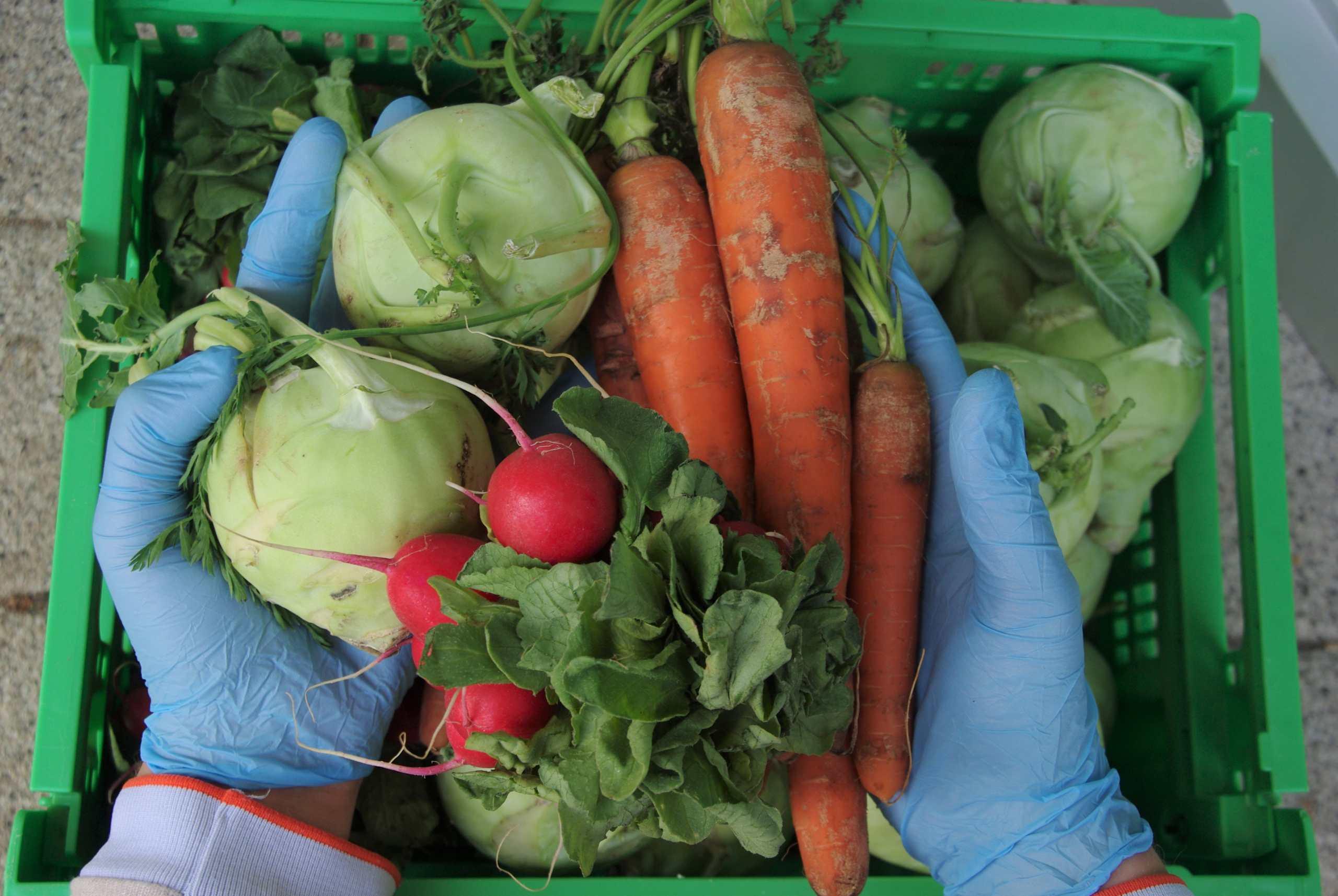 Hände in Gummihandschuhen heben Gemüse aus Korb