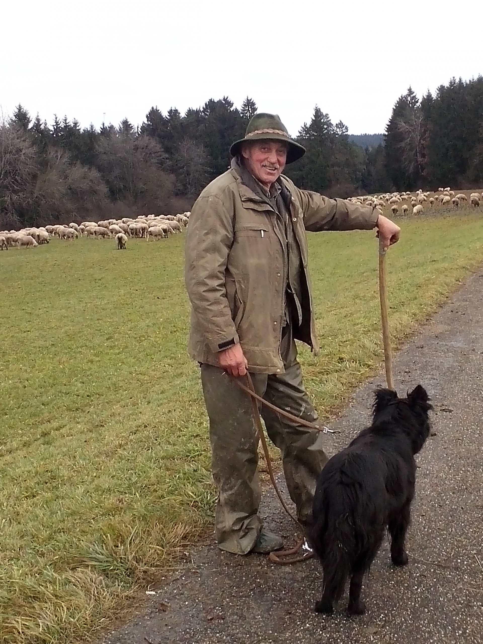 Schäfer, bekleidet mit Hut und regenfester, brauner Kleidung, und Hütehund, im Hintergrund am Waldrand eine große Herde Schafe